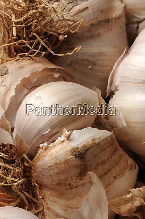 close up of a garlic braid