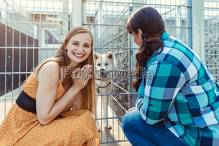 woman adopting a dog in the