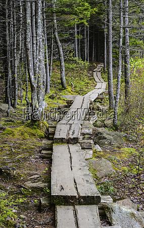 boardwalk through forest