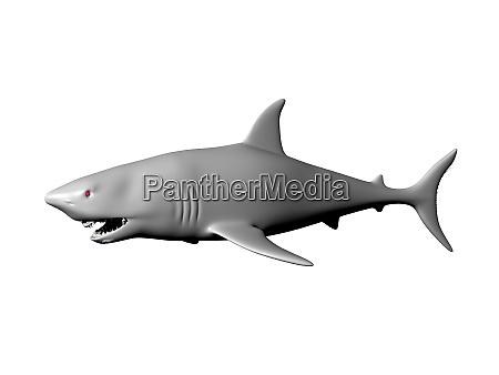 big shark swims in the sea