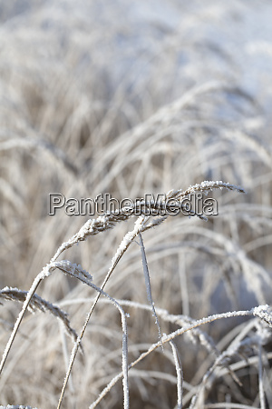 delicate frosted plants in daylight