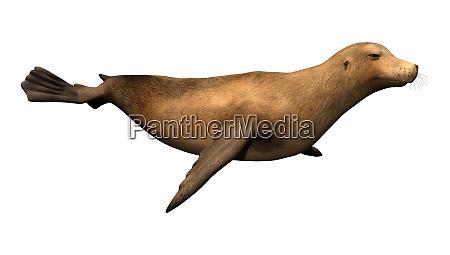 3d rendering harbor seal on white