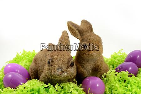 festive easter bunnies