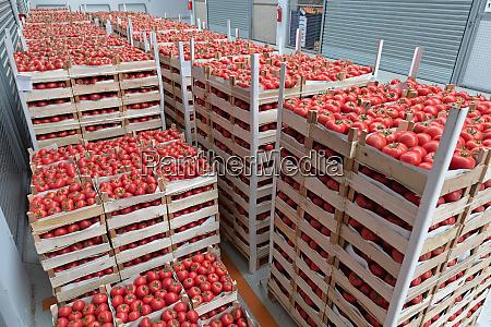 italian tomato import