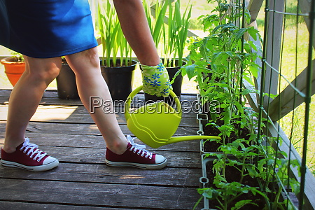 women gardener watering plants container vegetables