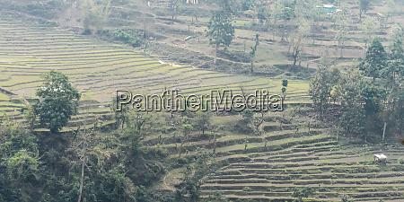 terrace cultivation in plains of uttaranchal