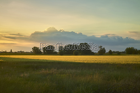 typical italian countryside landscape