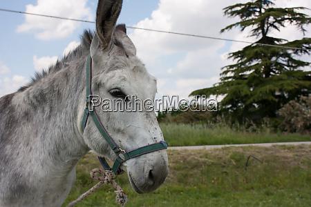 linked donkey