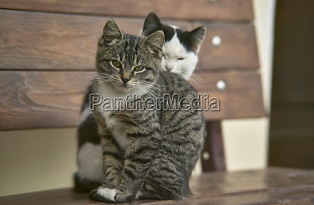 two cats sitting