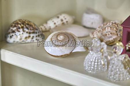 decorate with the snail