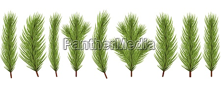 fir branch collection for christmas designs