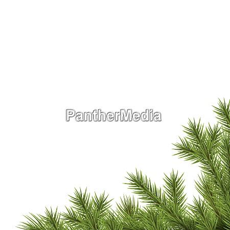fir branch lower right corner