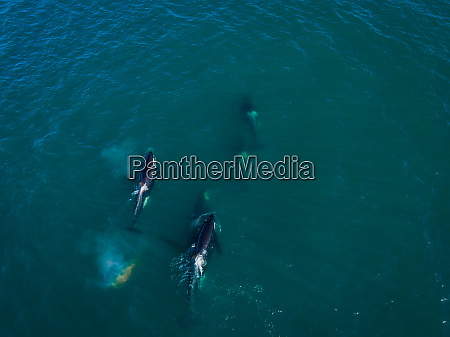 aerial view of group or orca