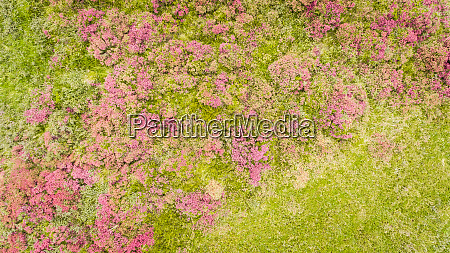 abstract aerial view of vegetation on