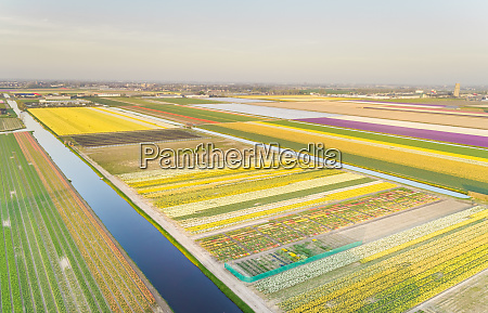aerial view of colorful blossoming flower