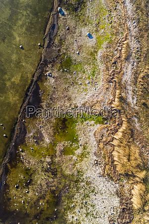 abstract aerial view of algae beach