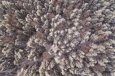 aerial view of the snowy colorful