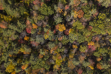 aerial view of autumns fall