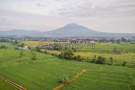 aerial panoramic view of rice fields