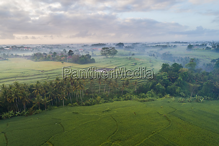 aerial panoramic view of morning rice