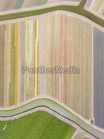 aerial view of flowers fields