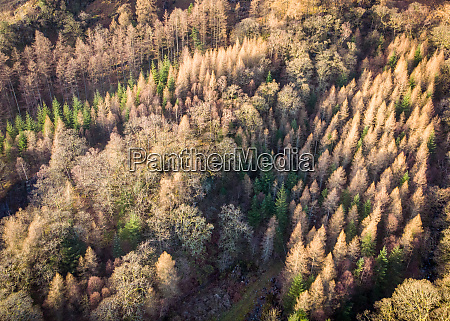 aerial, view, of, trees, during, winter - 27455142