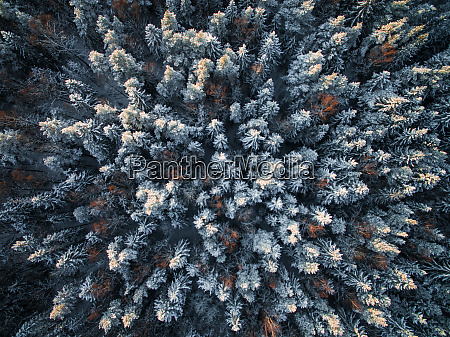 aerial view of forest during winter