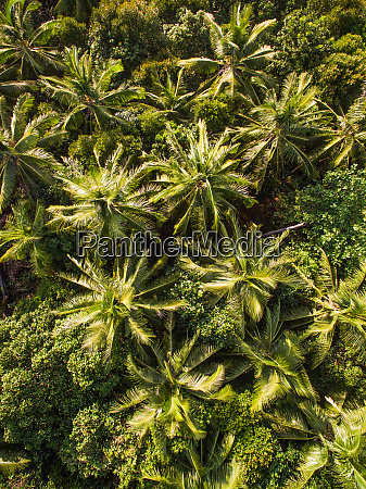 abstract aerial view of palm trees