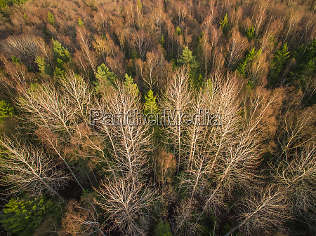 aerial view of a forest during