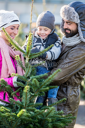 family buying christmas tree on market