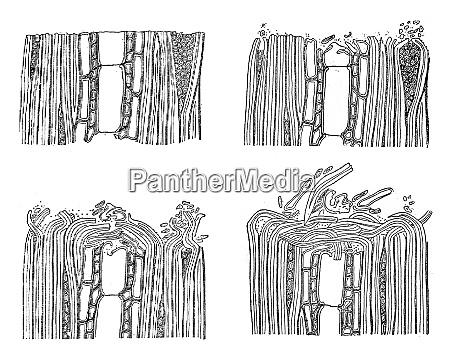 wood paving wear vintage engraving