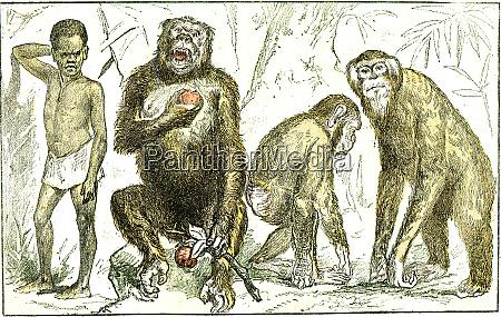 evolution of mammals towards the human
