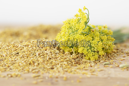 fennel flowers with pollen