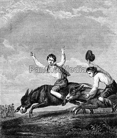the donkey race vintage engraving