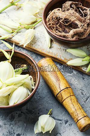 yucca flowers in medicine