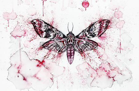 moth watercolor illustration