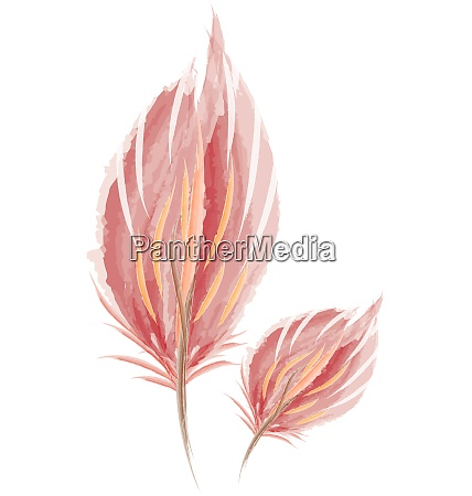 brown water color feather painting vector