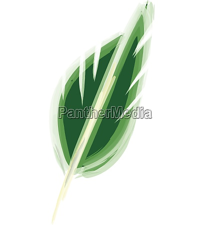 drawing of a green feather vector
