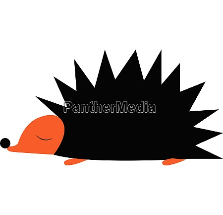 a hedgehog vector or color illustration