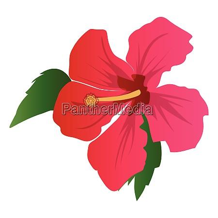 vector illustration of dark pink hibiscus