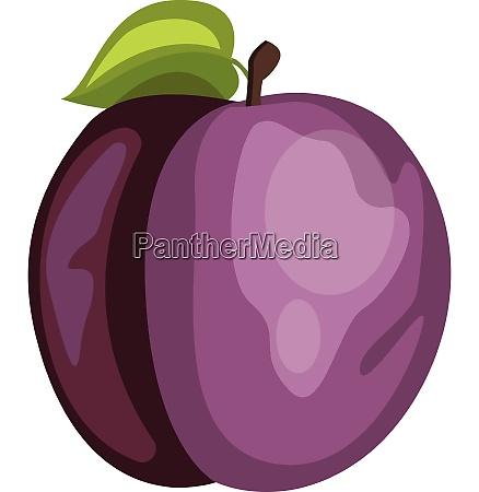 vector illustration of a purple plum