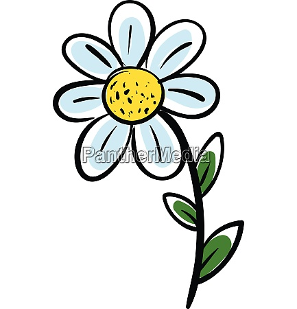 white chamomile flower with green leafs