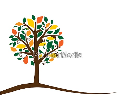 a tree with autumn foliage vector