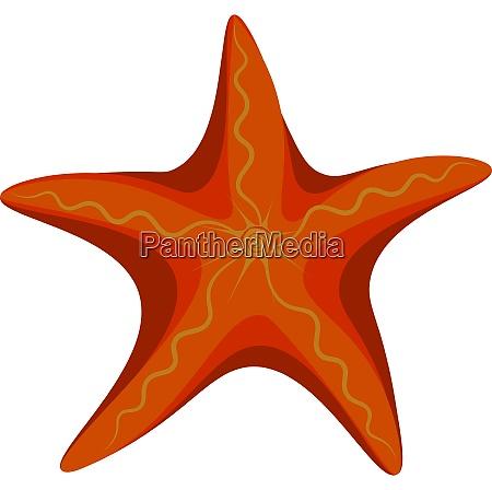 orange starfish vector or color illustration