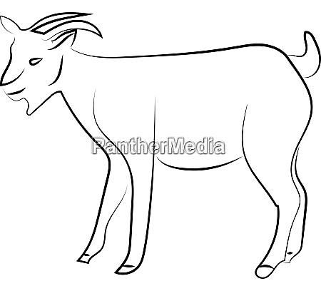 goat sketch illustration vector on white