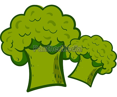 fresh and healty broccolis illustration vector