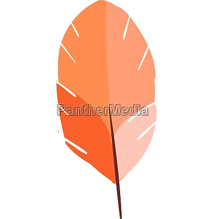 feather in three colors vector or