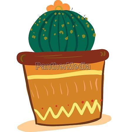 a round shape cactus house plant