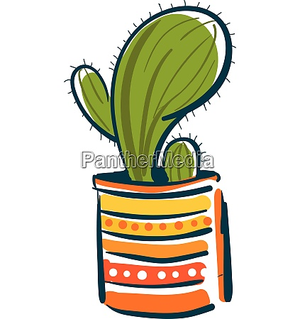 a single cactus plant in a