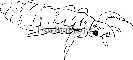 lice drawing illustration vector on white
